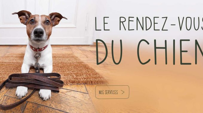 Chien Cover
